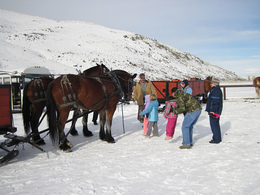 Sleigh riding in Steamboat Springs